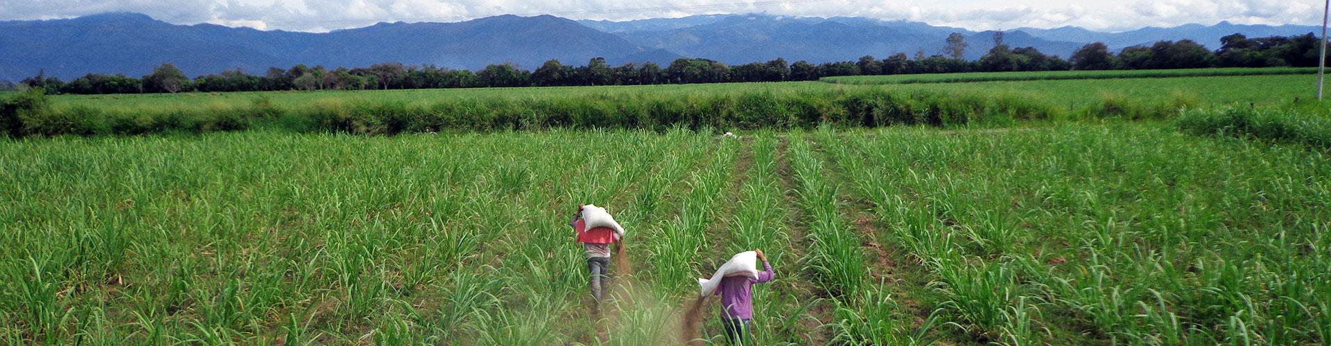 Ecorganicos de Colombia - 04